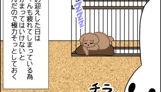 ついに我が家に虎太郎が来た!②