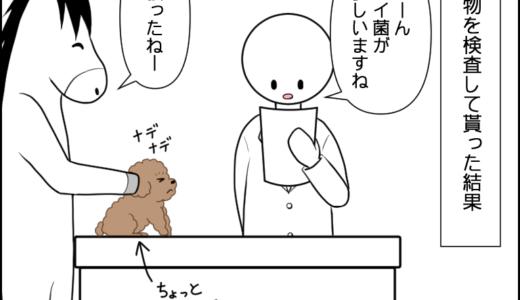 虎太郎の耳が痒い③