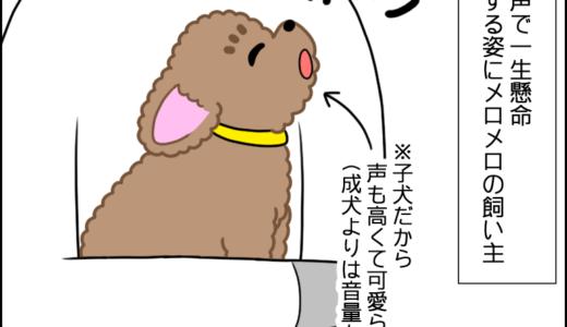 虎太郎の遠吠え②