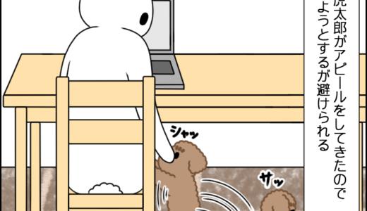 虎太郎のアピール④