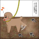 虎太郎と三桜の散歩